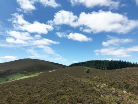 Tweed Valley guided MTB ride