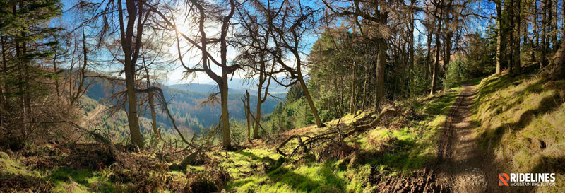 Glentress is mostly in the forest. But when you get a peek it rarely disappoints.