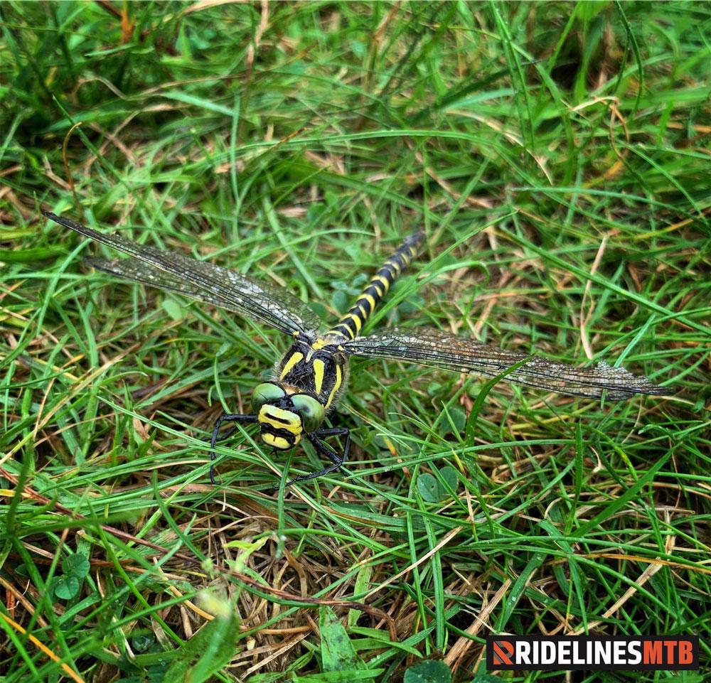 Ridelines Torridon Mountain Bike Loop Annat Dragonfly